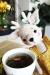 Crochet deer doll amigurumi free crochet pattern